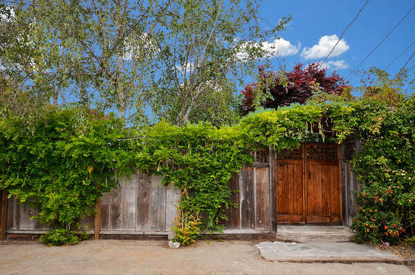 Lemon Tree Cottage photo